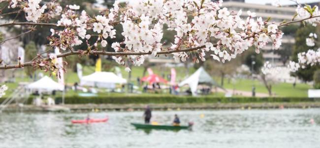 Primavera means Spring